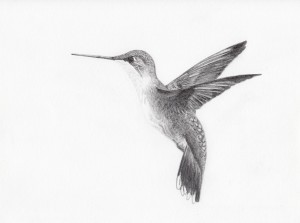 algoritmo Hummingbird google
