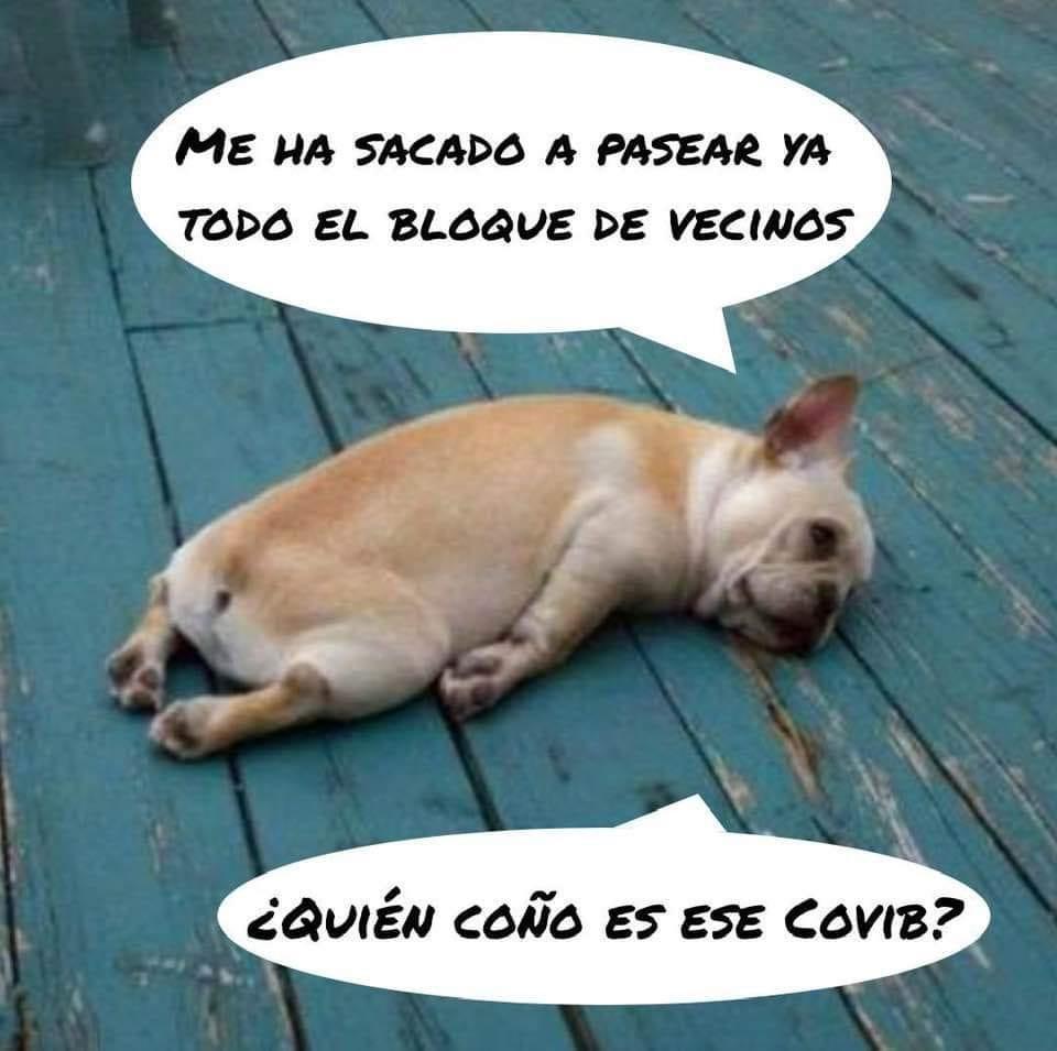 alquiler de perros por el coronavirus
